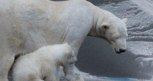 We stevenen volgens het nieuwe IPCC-rapport af op een klimaatcatastrofe. Dit zijn de redenen om het niet serieus te nemen