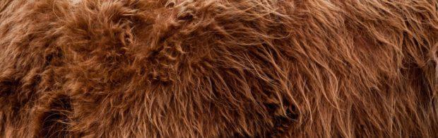 FBI geeft documenten over onderzoek naar Bigfoot vrij. Lees ze hier