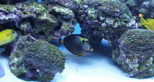 koraalvissen